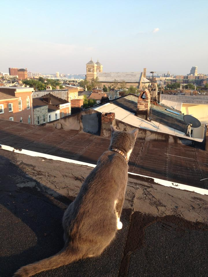 Cat on a Hot Tar Roof